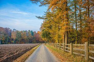 Фото на телефон дорога, поле