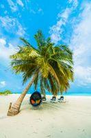 Фото бесплатно пейзаж, пальмы, океан