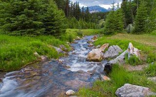 Заставки ручей, течение, камни, трава, деревья, лес, горы