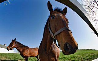 Бесплатные фото загон,забор,кони,лошади,пастбище,здание
