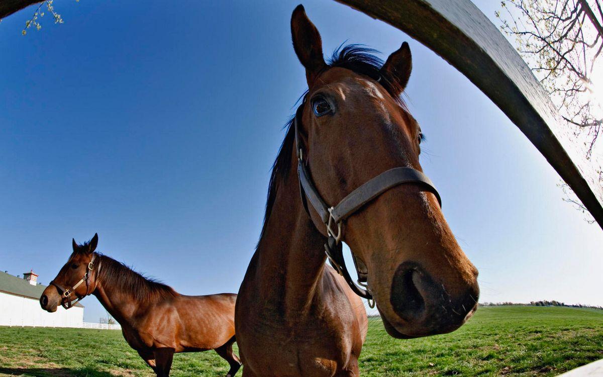 Фото бесплатно загон, забор, кони - на рабочий стол