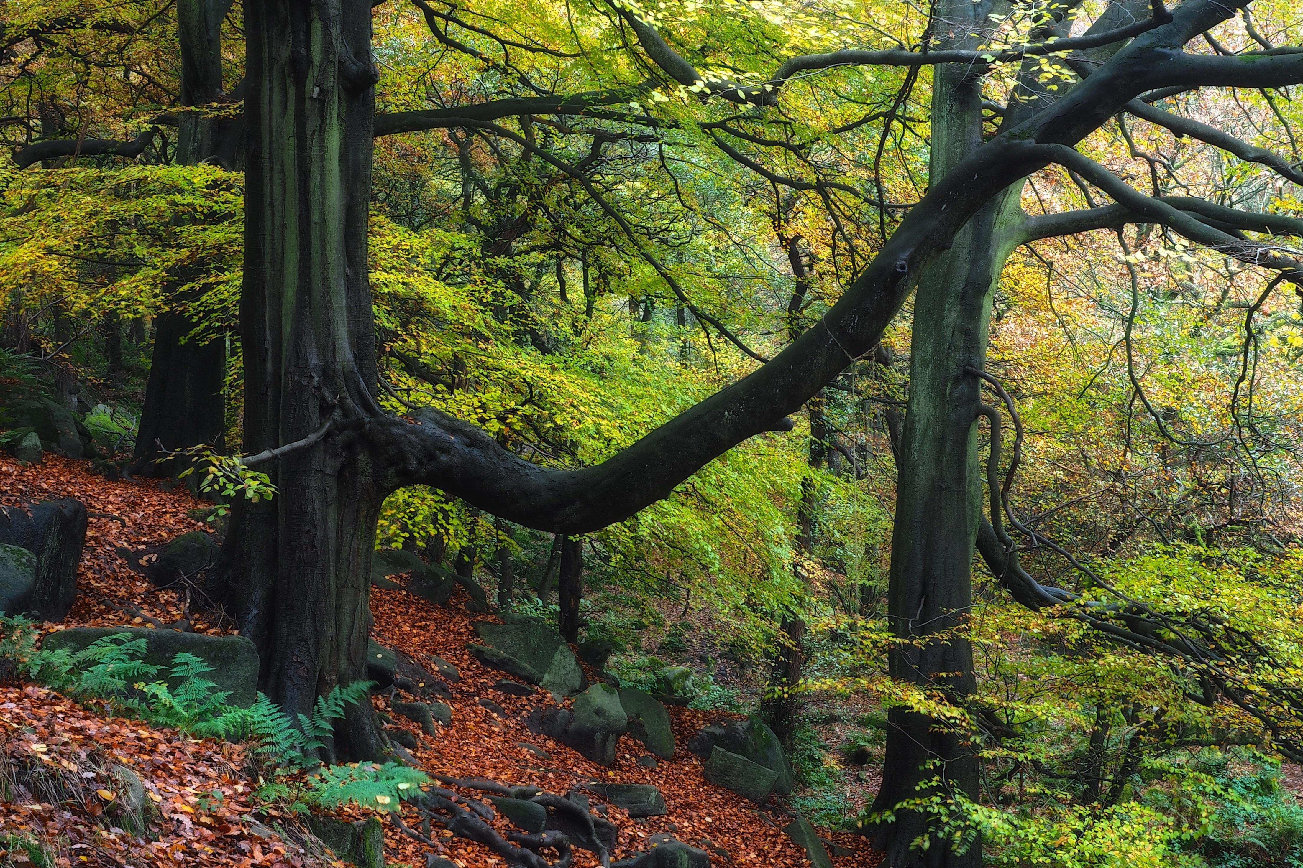 Обои лес, деревья, природа