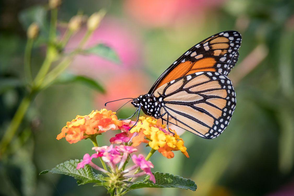 Обои бабочка, цветок, цветы картинки на телефон