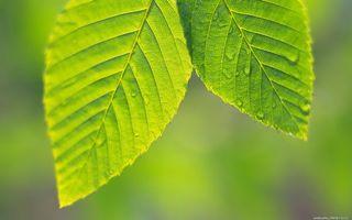 Бесплатные фото листья,зеленые,прожилки,капли,вода