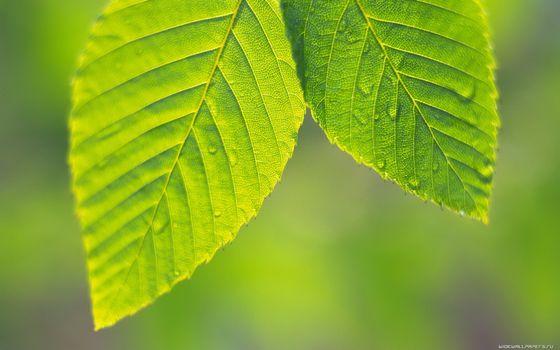 Фото бесплатно капли, прожилки, листья