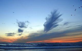 Фото бесплатно небо, птицы, горизонт
