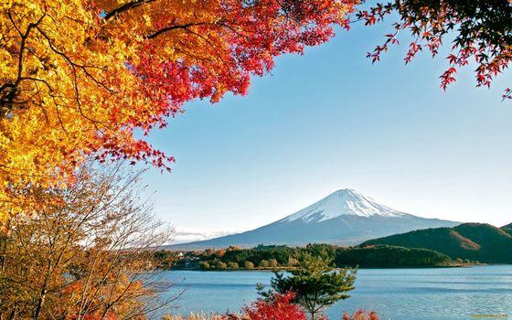 Фото бесплатно желтые, деревья, снег
