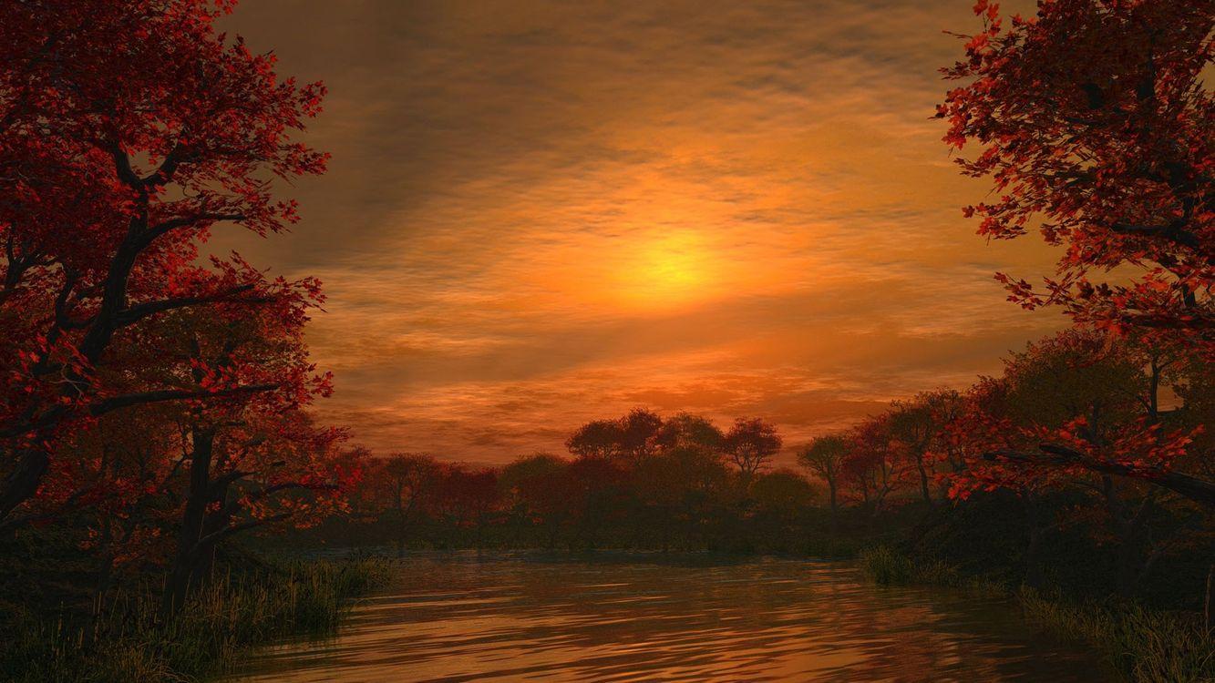 Фото бесплатно осень, вечер, деревья - на рабочий стол