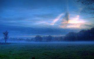 Бесплатные фото поле,трава,деревья,туман,небо,облака