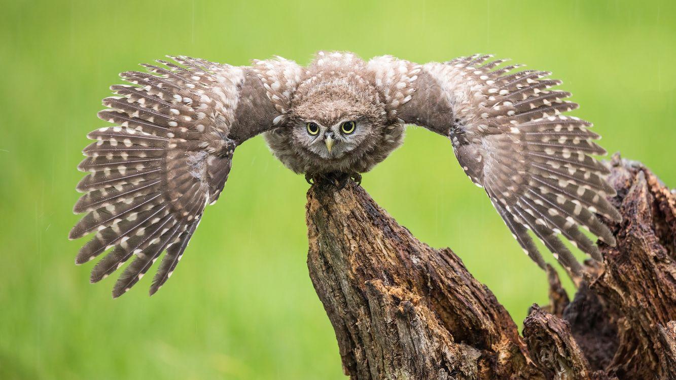 Фото бесплатно птица, сыч, хищник, птицы