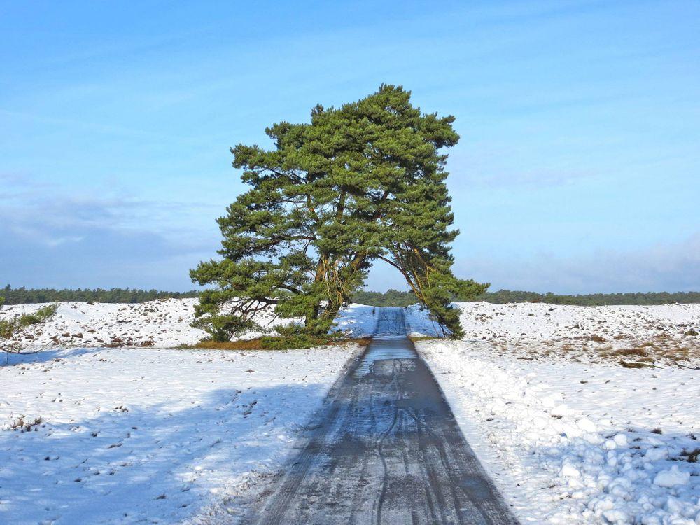 Фото бесплатно зама, дорога, дерево, природа - скачать на рабочий стол