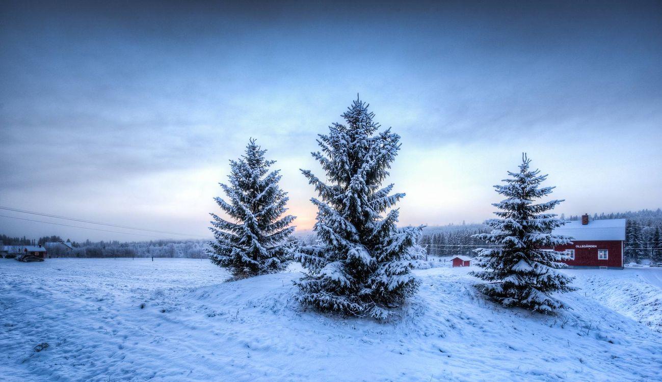 Фото бесплатно зима, деревья, домик - на рабочий стол