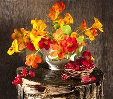 Бесплатные фото цветы,ваза,ягоды,натюрморт