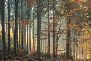 Бесплатные фото лес,природа,деревья,кусты,свет,осень,листья