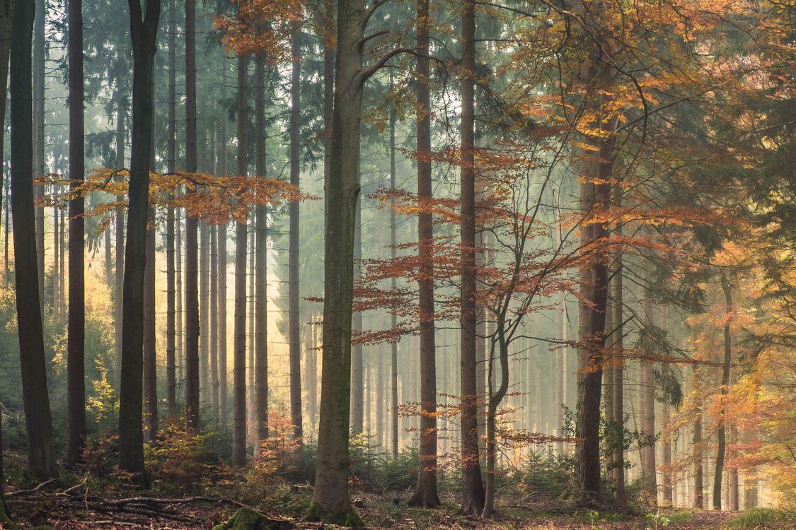 Фото бесплатно свет, деревья, листья - на рабочий стол