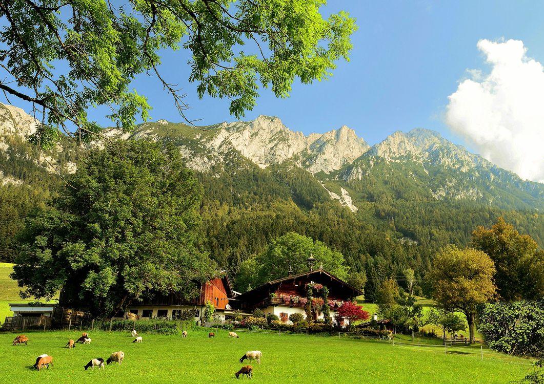 Фото бесплатно поле, пастбище, горы - на рабочий стол