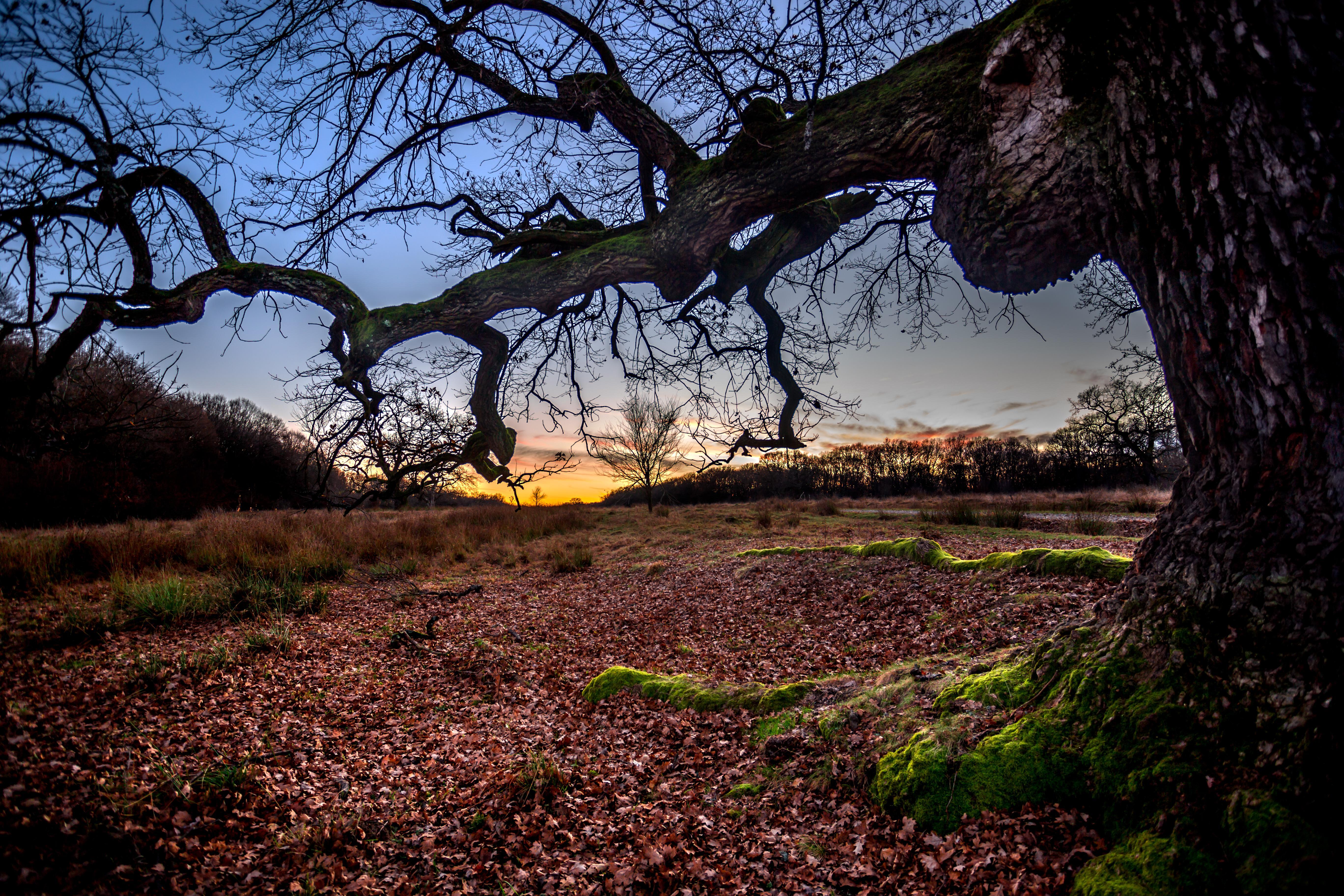 обои закат, поле, осень, деревья картинки фото