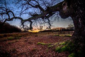 Бесплатные фото закат,поле,осень,деревья,пейзаж