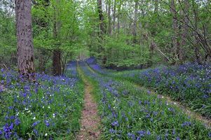 Бесплатные фото лес, деревья, дорога, цветы, пейзаж