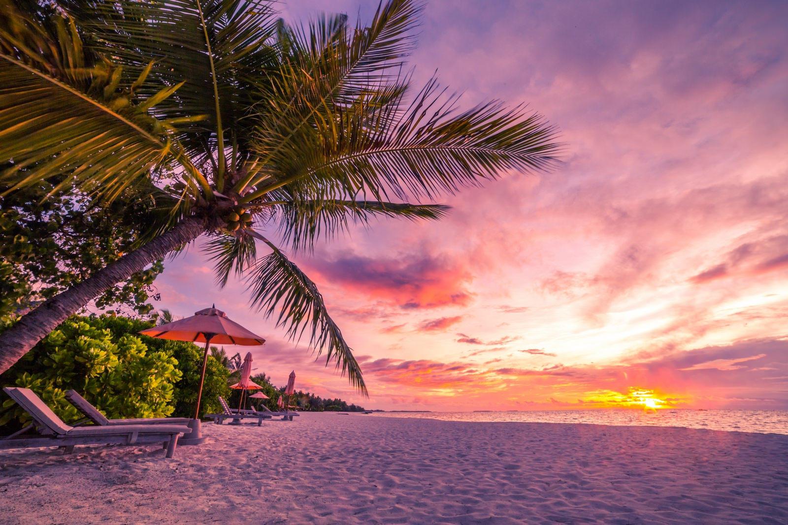 обои море, пляж, пальмы, закат картинки фото