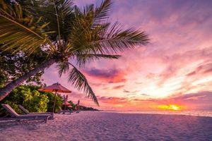 Бесплатные фото море,пляж,пальмы,закат,пейзаж