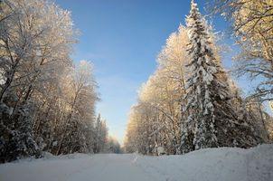 Фото бесплатно зима, ели, пейзаж
