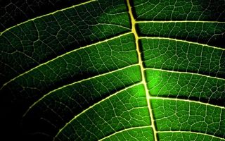 Бесплатные фото лист, зеленый, прожилки, светлые, заставка, обои