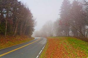 Фото бесплатно дорога, осень, деревья