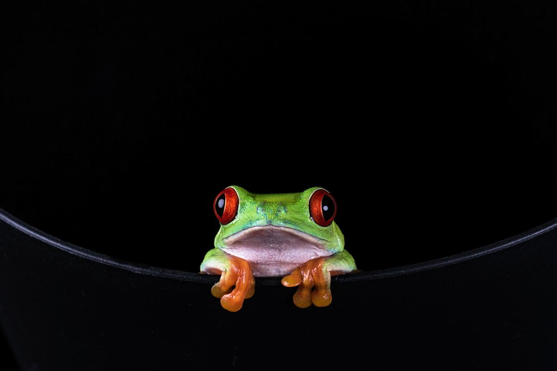 Фото бесплатно лягушка, зеленая, маленькая - на рабочий стол