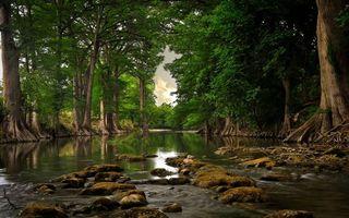 Бесплатные фото река,камни,деревья,лес