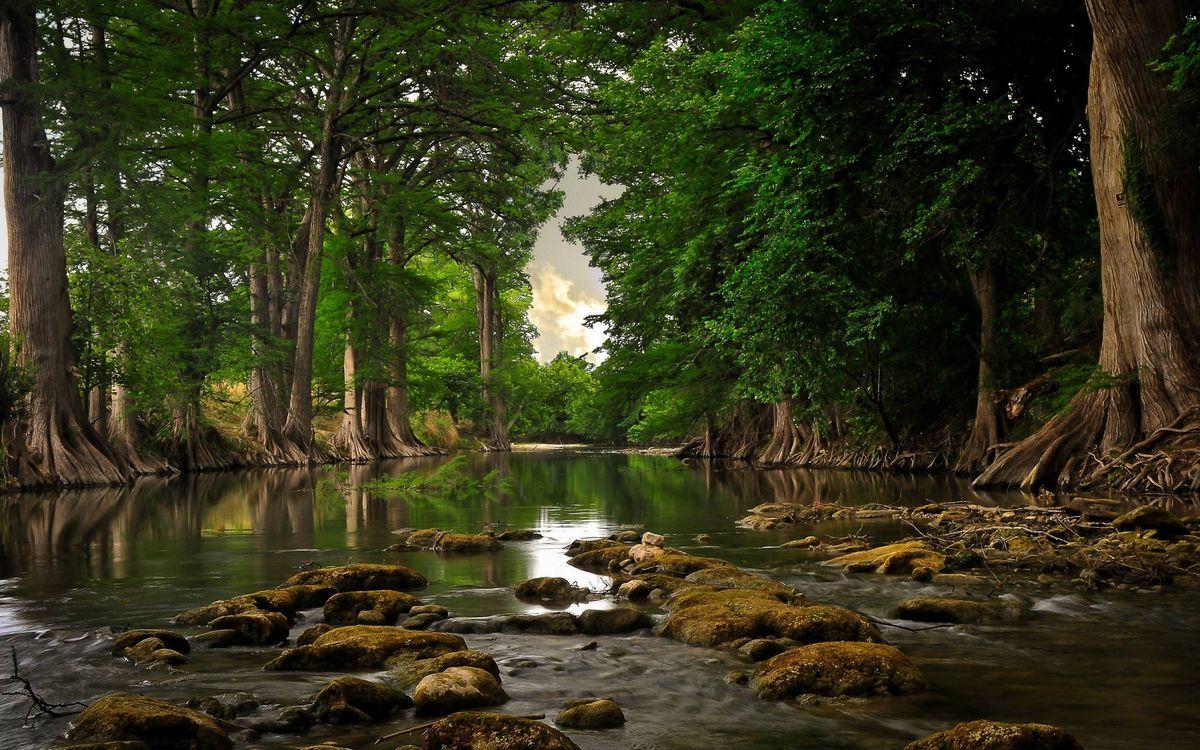 Фото бесплатно река, камни, деревья, лес, природа