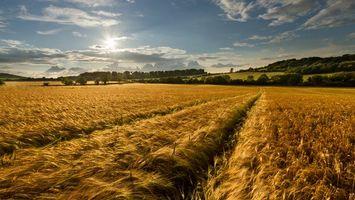 Фото бесплатно пшеничное поле, яркое солнце, потрясающий день