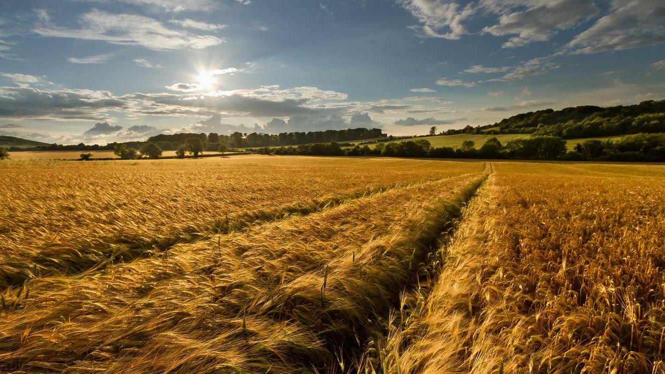 Фото бесплатно пшеничное поле, яркое солнце, потрясающий день, пейзажи