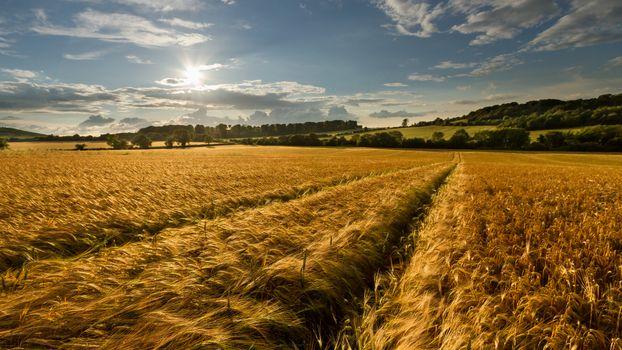 Photo free wheat field, bright sun, amazing day