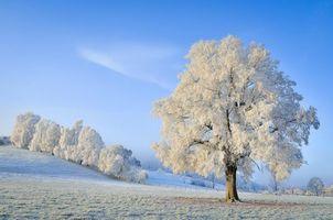 Бесплатные фото зима,поле,холмы,иней,деревья,пейзаж