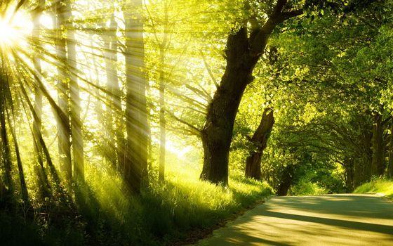 Фото бесплатно аллея, дорожка, деревья