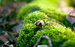 Фото бесплатно мох, увядшие, листья, природа