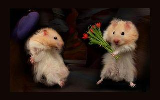 Фото бесплатно хомячки, морды, лапы, шерсть, дарит цветы