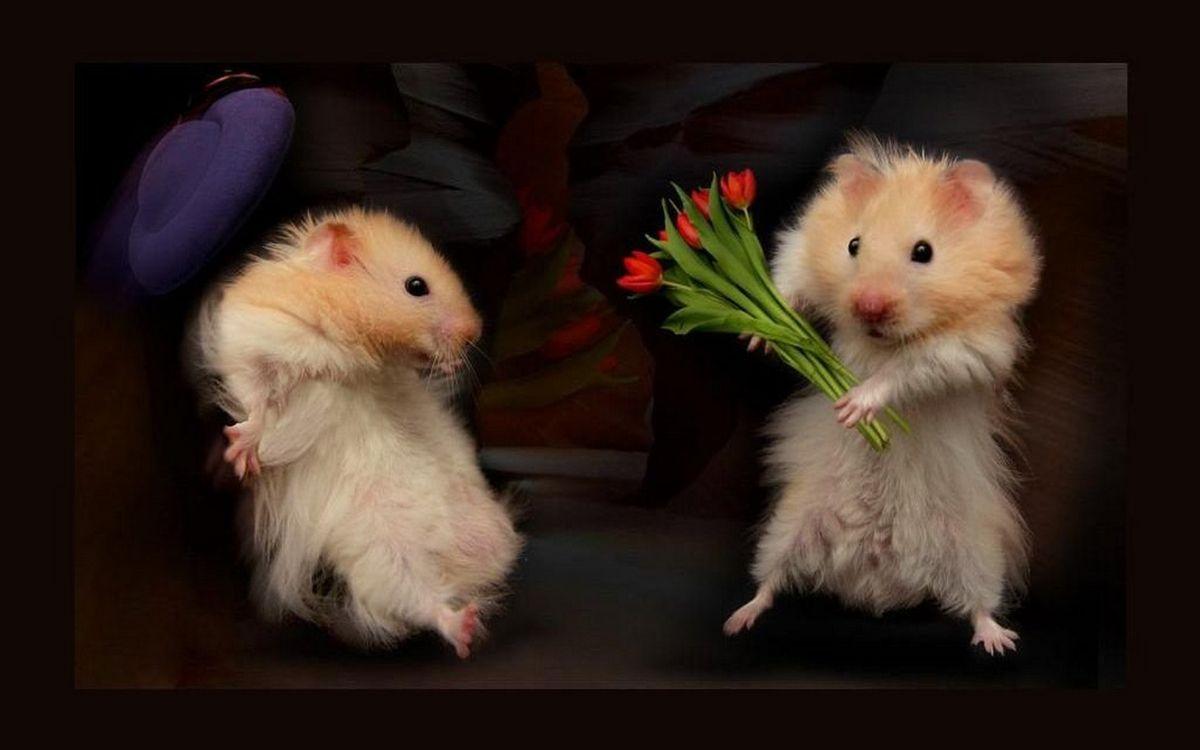 Фото бесплатно хомячки, морды, лапы, шерсть, дарит цветы, фантастика