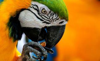 Фото бесплатно попугай, крупный, план, есть, клюв, глаза, оранжевый, красочный, фон
