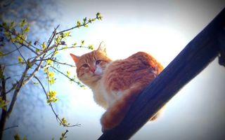 Бесплатные фото кот,морда,хвост,шерсть,ветви,вид снизу вверх