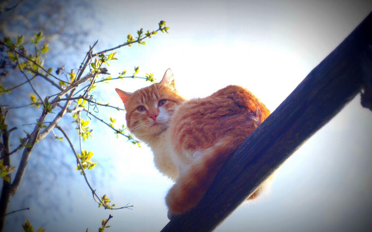 Фото бесплатно кот, морда, хвост, шерсть, ветви, вид снизу вверх, кошки