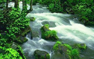 Бесплатные фото лес, ручей, течение, камни, мох, трава