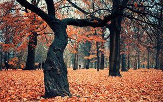 Заставки осень, дерево, листья, опавшие