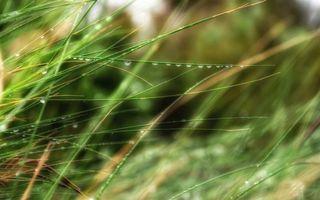 Фото бесплатно трава, стебли, вода