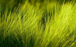 Фото бесплатно стебли, зеленый, фон