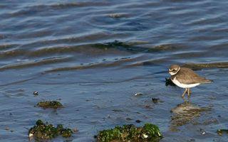 Photo free pond, shore, seaweed