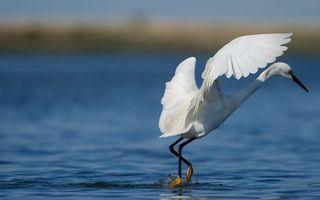 Бесплатные фото цапля,клюв,крылья,перья,лапы,водоем
