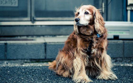 Заставки собака, ждет, поводок