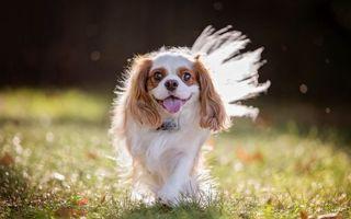 Заставки собака, трава, взгляд